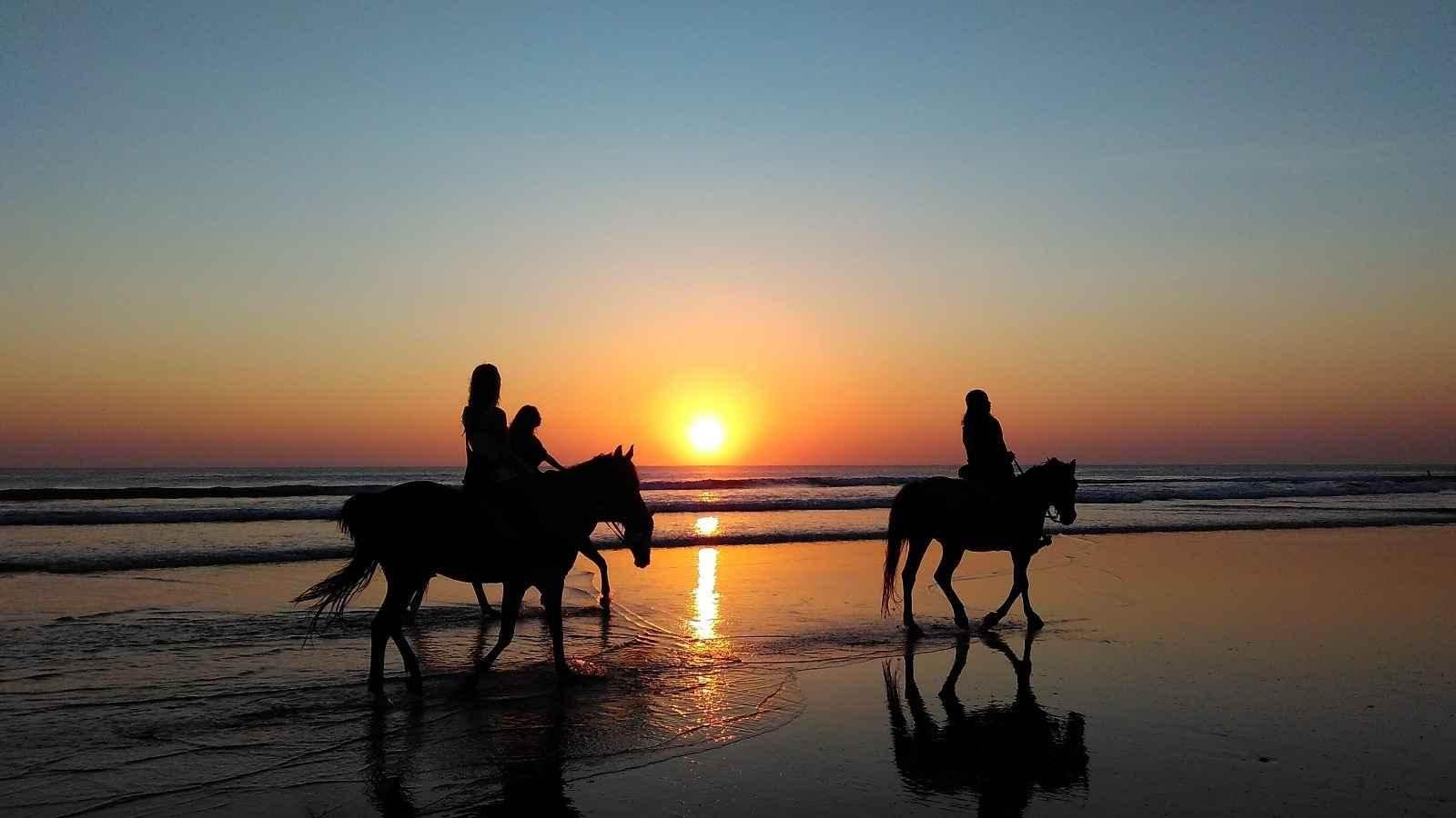 Animalfix horses